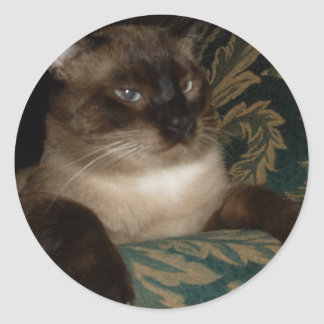Pouty Face Siamese Cat Sticker