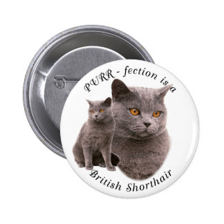 PPURR-fection British shorthair Blue Buttons