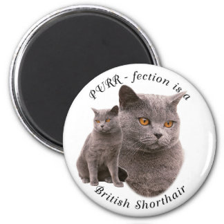 PPURR-fection British shorthair Blue Magnet