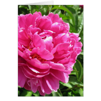 Practically Perfect Peony Card