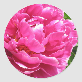 Practically Perfect Peony Classic Round Sticker