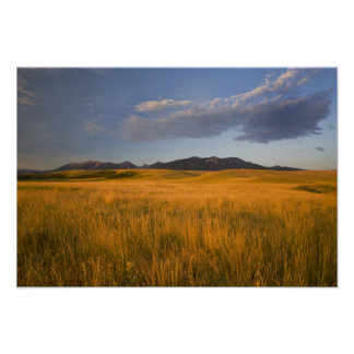 Praire grasslands in the foothills of the poster