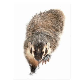 Prairie Badger in Winter snow Postcard