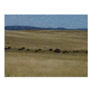 Prairie Buffalo by Shawna Mac Postcard