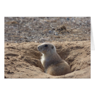 Prairie Dog Birthday Card