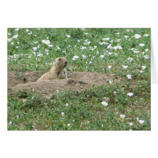 Prairie Dog Card