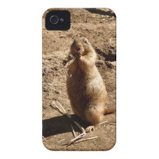 Prairie Dog iPhone 4 Covers