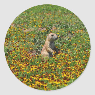 Prairie Dog in Flowers Classic Round Sticker