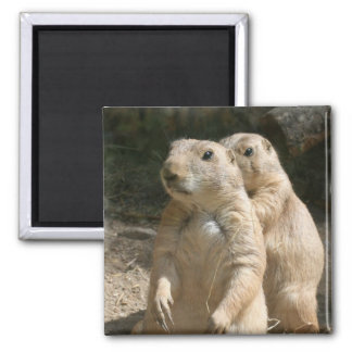 Prairie Dog Photo Square Magnet