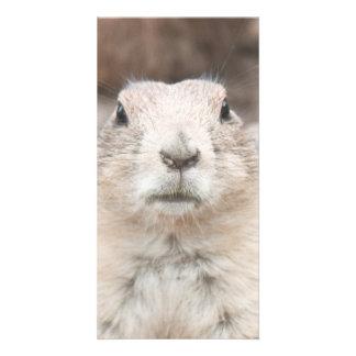 Prairie dog portrait photo greeting card