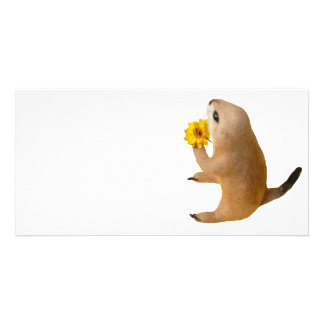 prairie dog s stuffed toy picture card