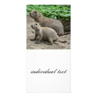 prairie dogs 04 photo card template