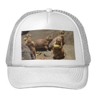 Prairie Dogs Eating Dinner 1 Cap