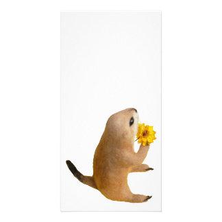 prairie dog's stuffed toy customized photo card