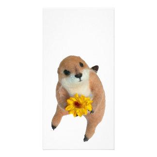 prairie dog's stuffed toy photo cards