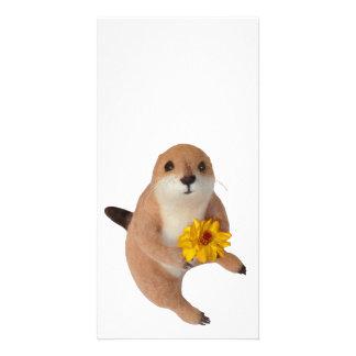 prairie dog's stuffed toy photo greeting card