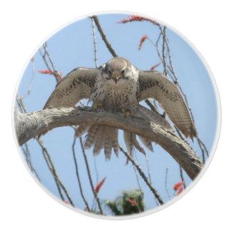 Prairie Falcon Ceramic Knob
