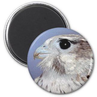 Prairie Falcon Magnet