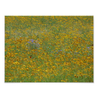Prairie flowers, Indiana Poster