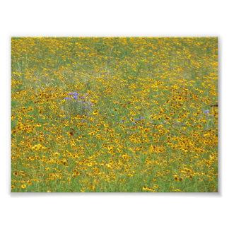 Prairie flowers photo print