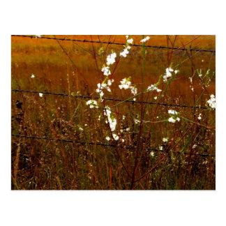 PRAIRIE FLOWERS POSTCARD