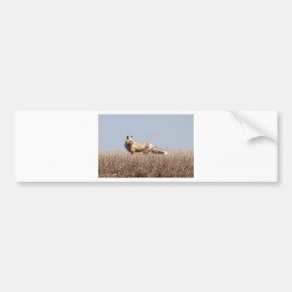 Prairie Fox Bumper Sticker