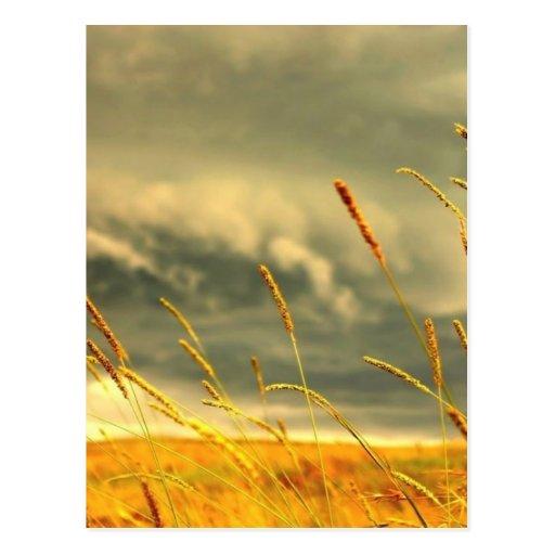 Prairie Grass Post Card