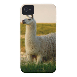 Prairie Llama Mama Case-Mate iPhone 4 Case