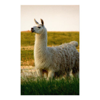 Prairie Llama Mama Stationery