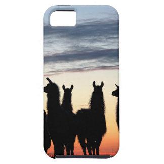 Prairie Llama silhouette Case For The iPhone 5