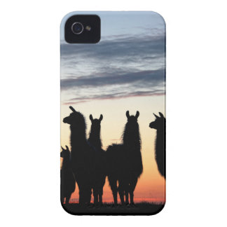 Prairie Llama silhouette Case-Mate iPhone 4 Cases