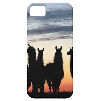 Prairie Llama silhouette iPhone 5 Cases