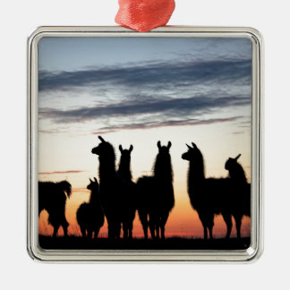 Prairie Llama silhouette Metal Ornament