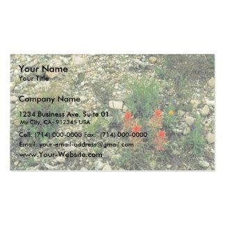 Prairie Paintbrush Business Card Templates