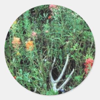 Prairie Paintbrush Sticker