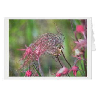 Prairie Smoke Flower Card