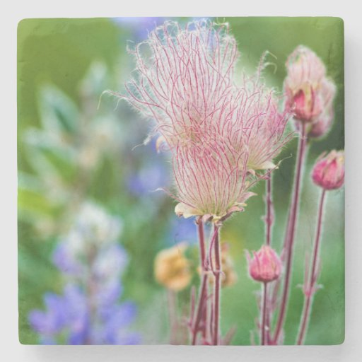 Prairie Smoke Wildflowers In Aspen Grove 2 Stone Coaster