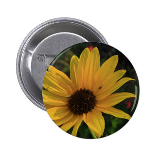 Prairie Sunflower 6 Cm Round Badge