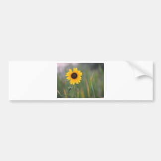 Prairie Sunflower Bumper Sticker