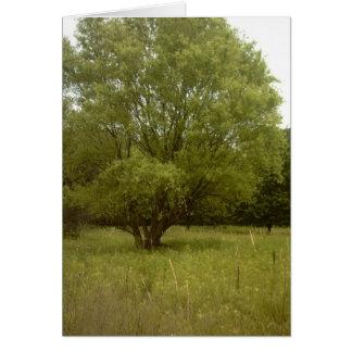 Prairie Tree Borderless Card