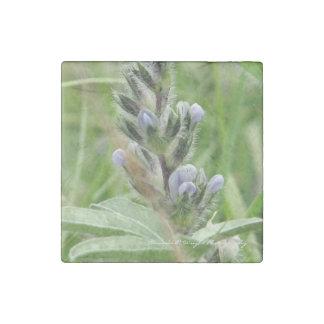 Prairie Turnip Magnet