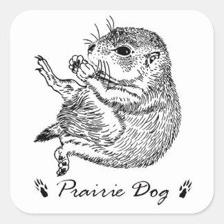 prairiedog sketch (sketch of prairie dog) square sticker