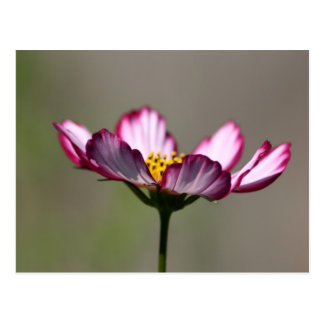 Praise Him Flower Postcard