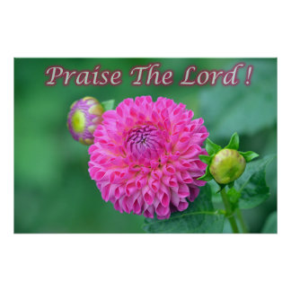 Praise The Lord Pink Dahlia Poster
