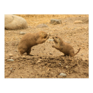 Prarie Dogs Give Me Some Skin Post Card