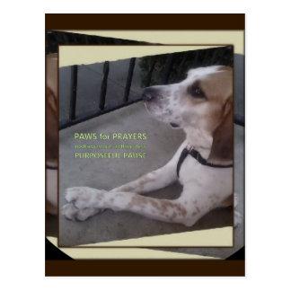 Prayer Dog Paws Postcard
