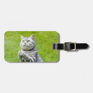 Praying cat on green grass luggage tag