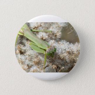 praying mantis 6 cm round badge