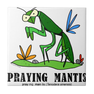 Praying Mantis by Lorenzo Traverso Tile