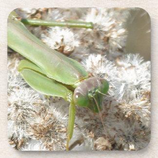 praying mantis coaster